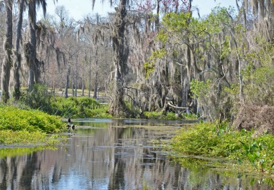 wakulla-springs-edward-ball-state-park