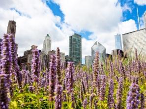 urban-garden3